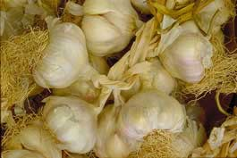 Farming Garlic With Hard-to-Find Varieties for Best Prices