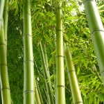 How to Make $60,000 a Year With a Bamboo Nursery