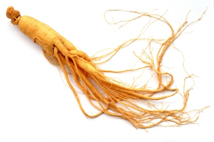 Golden-harvest-single-ginseng-root.jpg