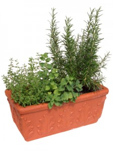 profitable potted herbs
