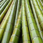 How to Start a Backyard Bamboo Nursery for $800
