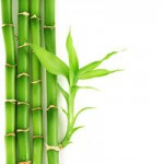 4 Ways to Profit With a Bamboo Business