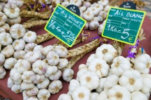 Growing for profit with fresh garlic
