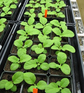 Growing For Profit With Seedlings