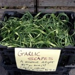 Golden harvest garlic scape pic