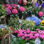 Blueprint For a Successful Flower Growing Business