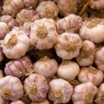 Growing for profit with garlic bulbs