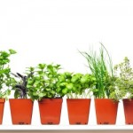 How to Start a Backyard Herb Business in a Month