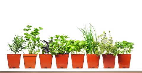 Image Result For How To Start A Herb Garden In Pots