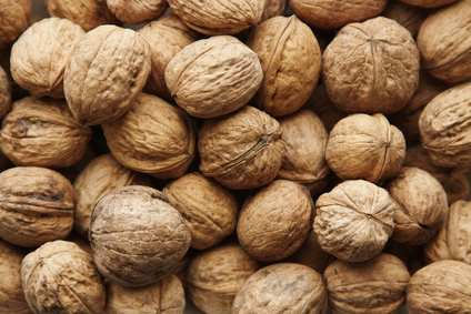 Fruit trees nut trees apple trees pecan trees peach trees personal blog - Growing french walnuts for a profit ...