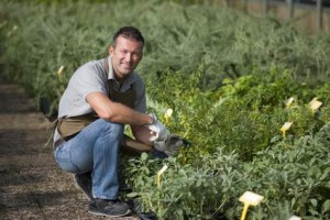 Growing Herbs for Profit