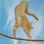 The Best Specialty Crop for Cat Lovers