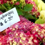How To Start a Flower Farming Business