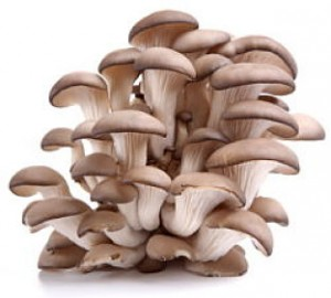 Profitable Oyster Mushrooms