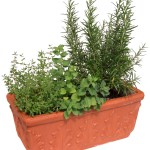 Get Rich Slowly – Growing Herbs For Profit