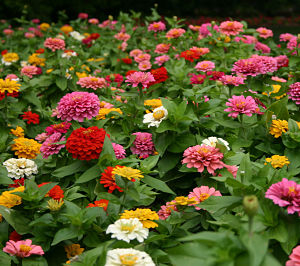 Growing For Market How To Start A Flower Growing Business Profitable Plants