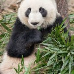 Earn Extra Cash Growing Bamboo In Your Backyard