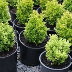 Five Questions You Must Ask Before Starting a Backyard Plant Nursery