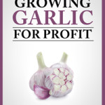 How to Start a Profitable Garlic Business for Under $600
