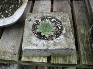 hypertufa plant container