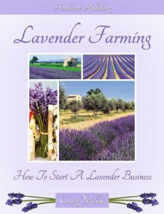 lavender farming: how to start a lavender business